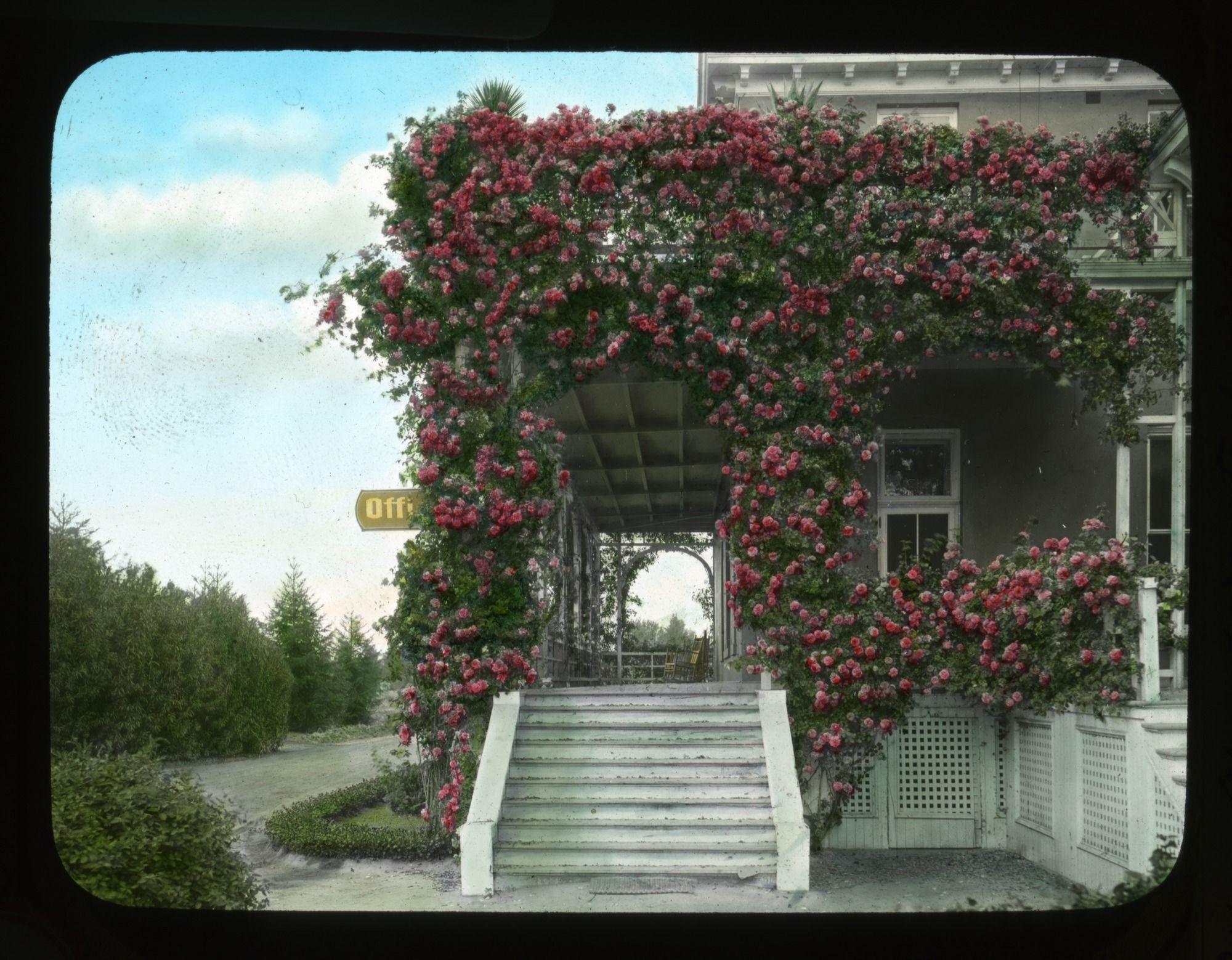 The Rose Reine Alga De Wurtenburg Covers A Porch At Kearny