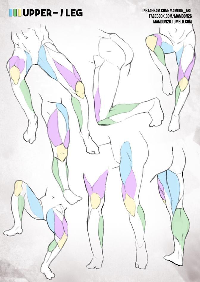Pin by Lossyian Replaysher on 신체일부(실제)   Pinterest   Anatomy ...
