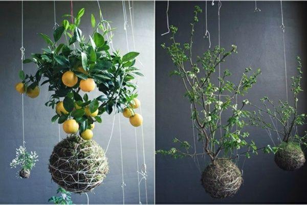 zitronenbaum aufhängen balkon coole ideen zimmerpflanzen garten