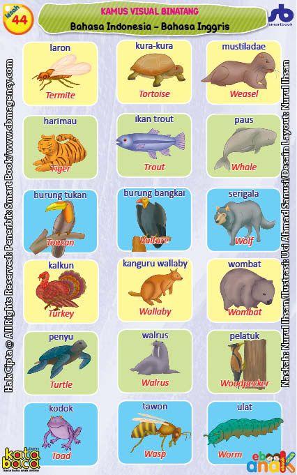 Kamus Visual Binatang Bergambar Dua Bahasa Indonesia Inggris 11 Binatang Gambar Bahasa