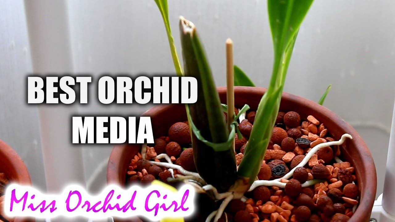 Best long lasting orchid media so far how to not repot too often