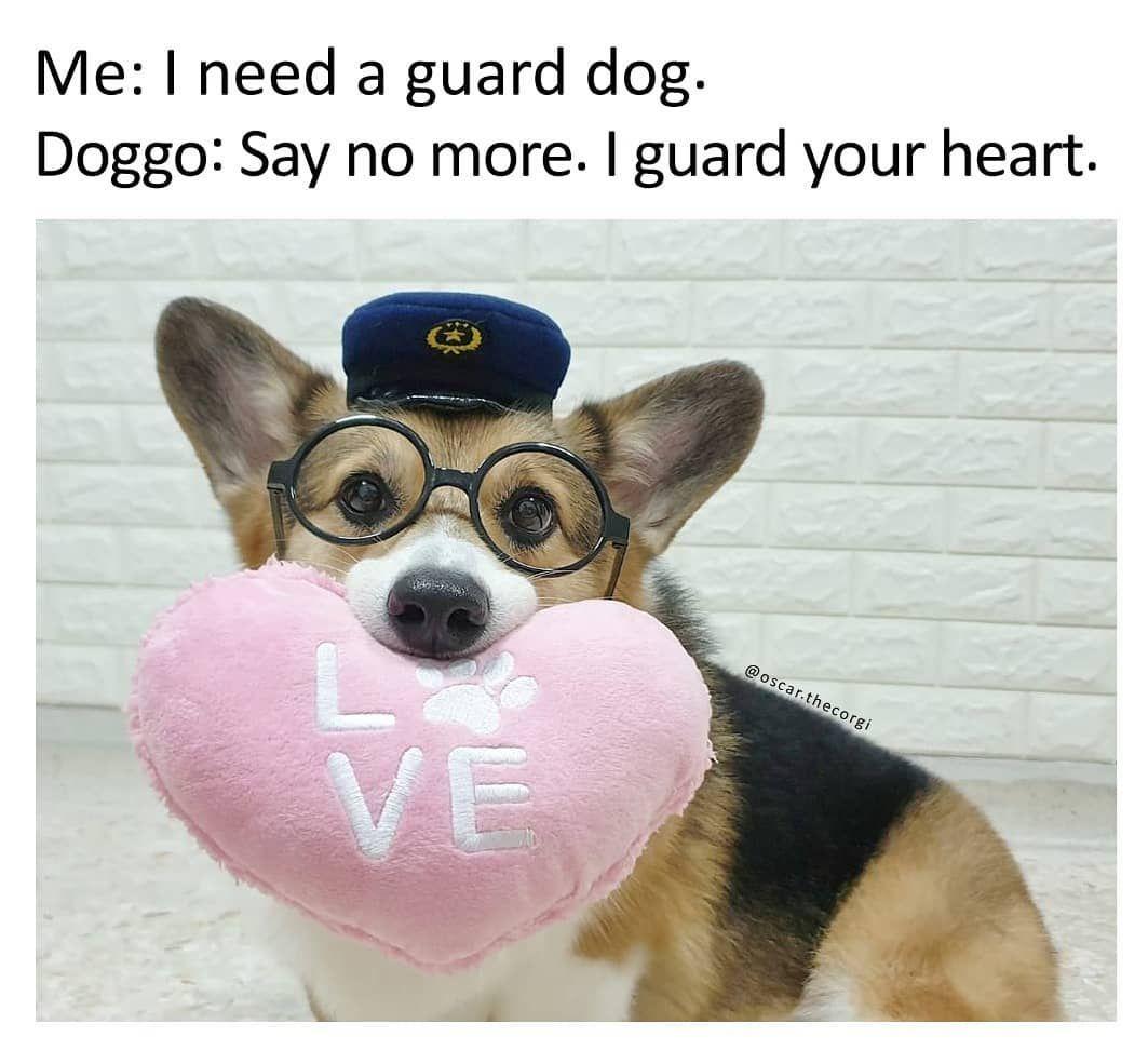 Corgi Dog Meme Funny Dog Memes Pet Memes Funny Pet Memes Dog Humor