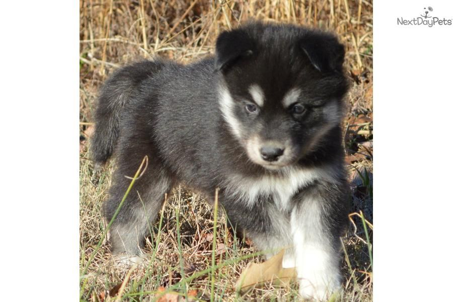 Trained puppies for sale maryland