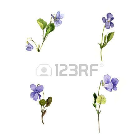 Stock Photo Violet Tattoo Vintage Flower Tattoo