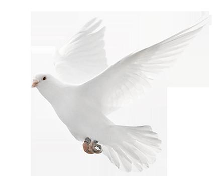 Weiße Taube Bedeutung