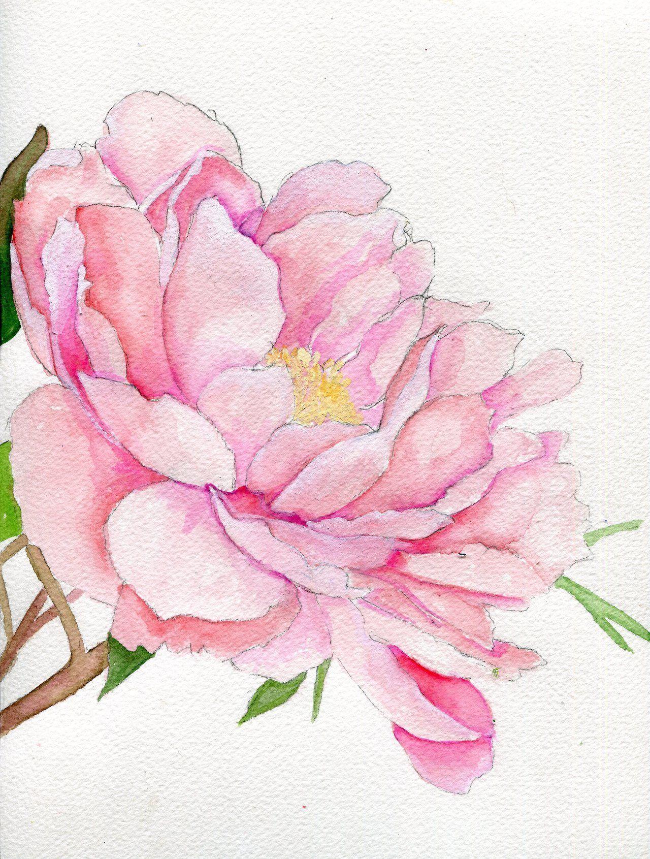 Pretty Flowers Tumblr Watercolor Peonies Floral Watercolor