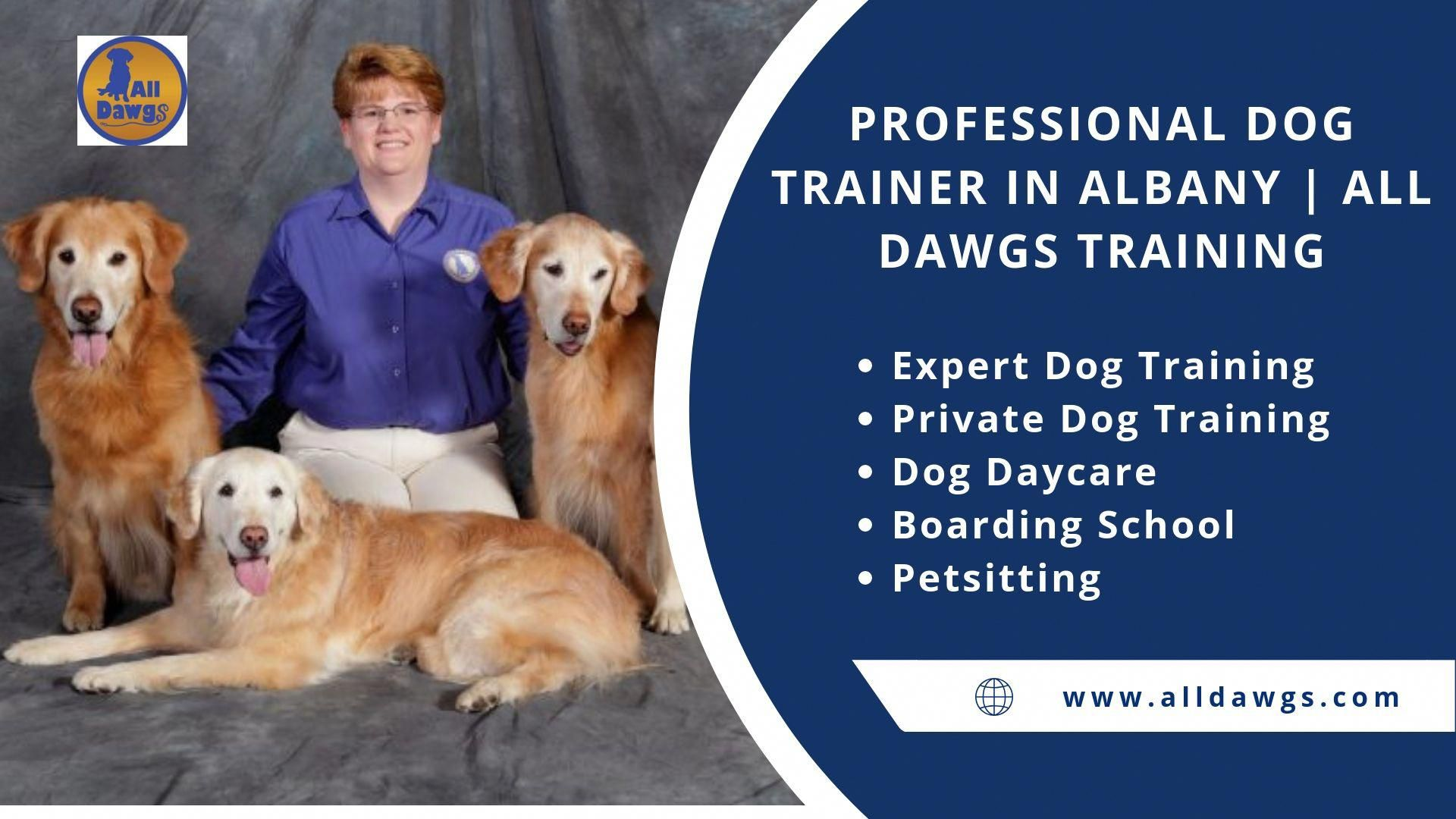 All Dawgs Offer The Professional Dog Training In Albany Including