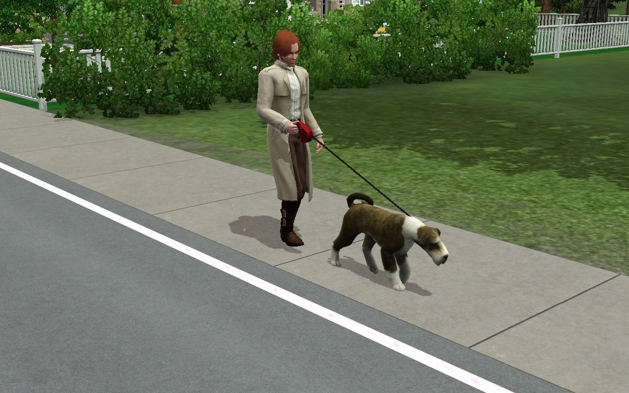 Tootsie going for his walk with Jared