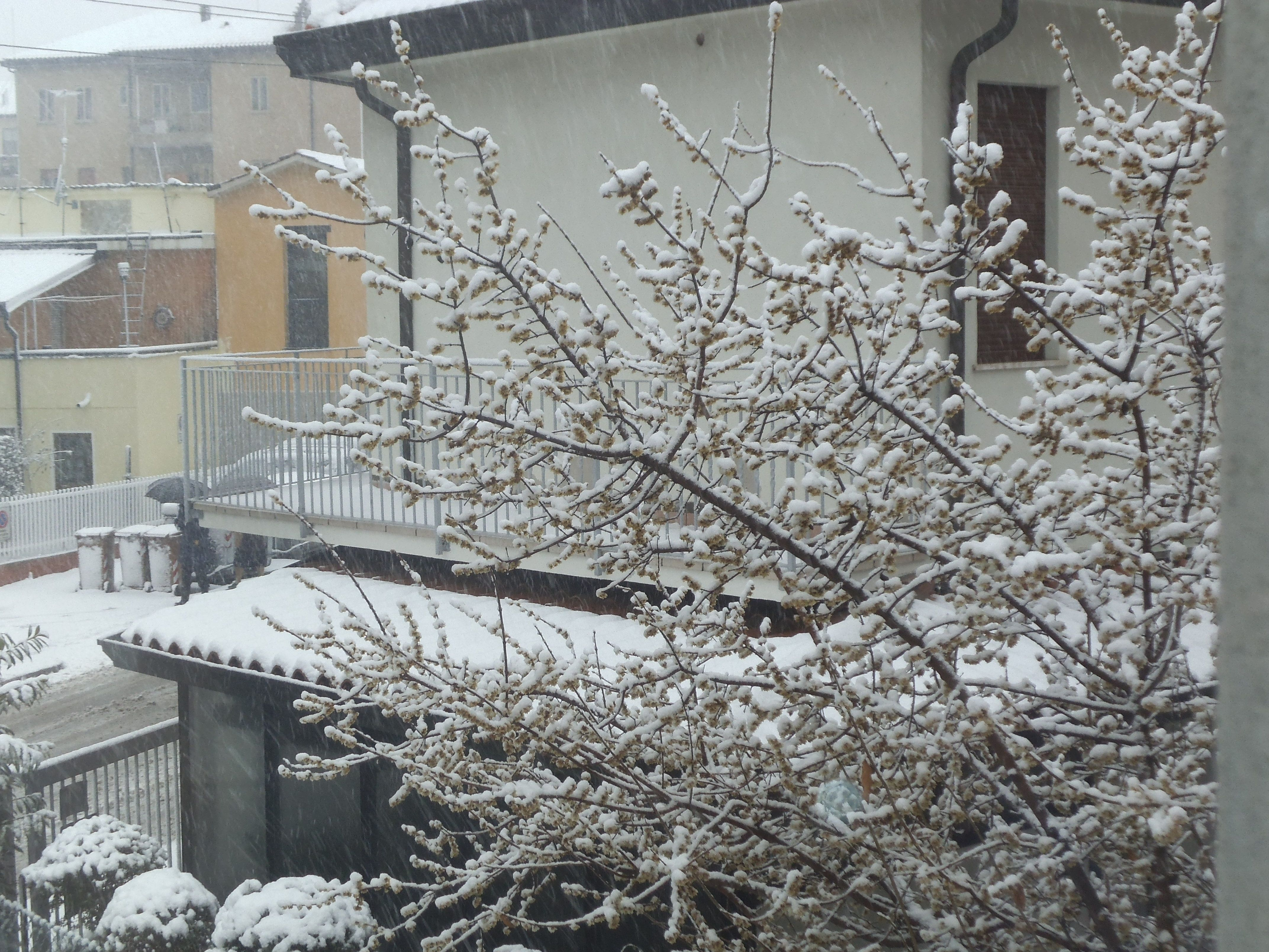 INVERNO - nevicata a PADOVA 2013