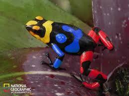 selva amazonica ranas - Buscar con Google