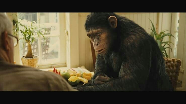 Caesar Planet Of The Apes Movie Art Photo
