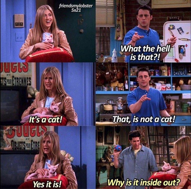 Isso ñ é um gato \