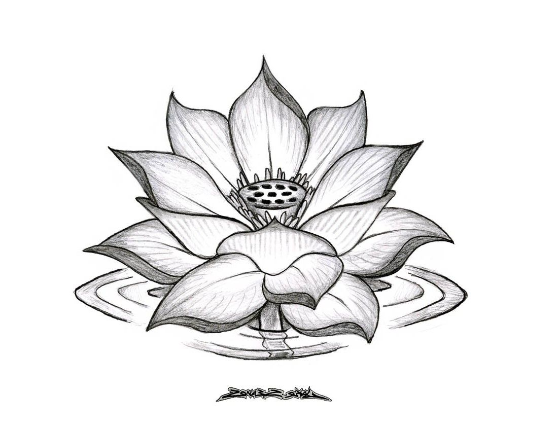 Lotus Flower Drawings For Tattoos Lotus Flower Drawing Tumblr