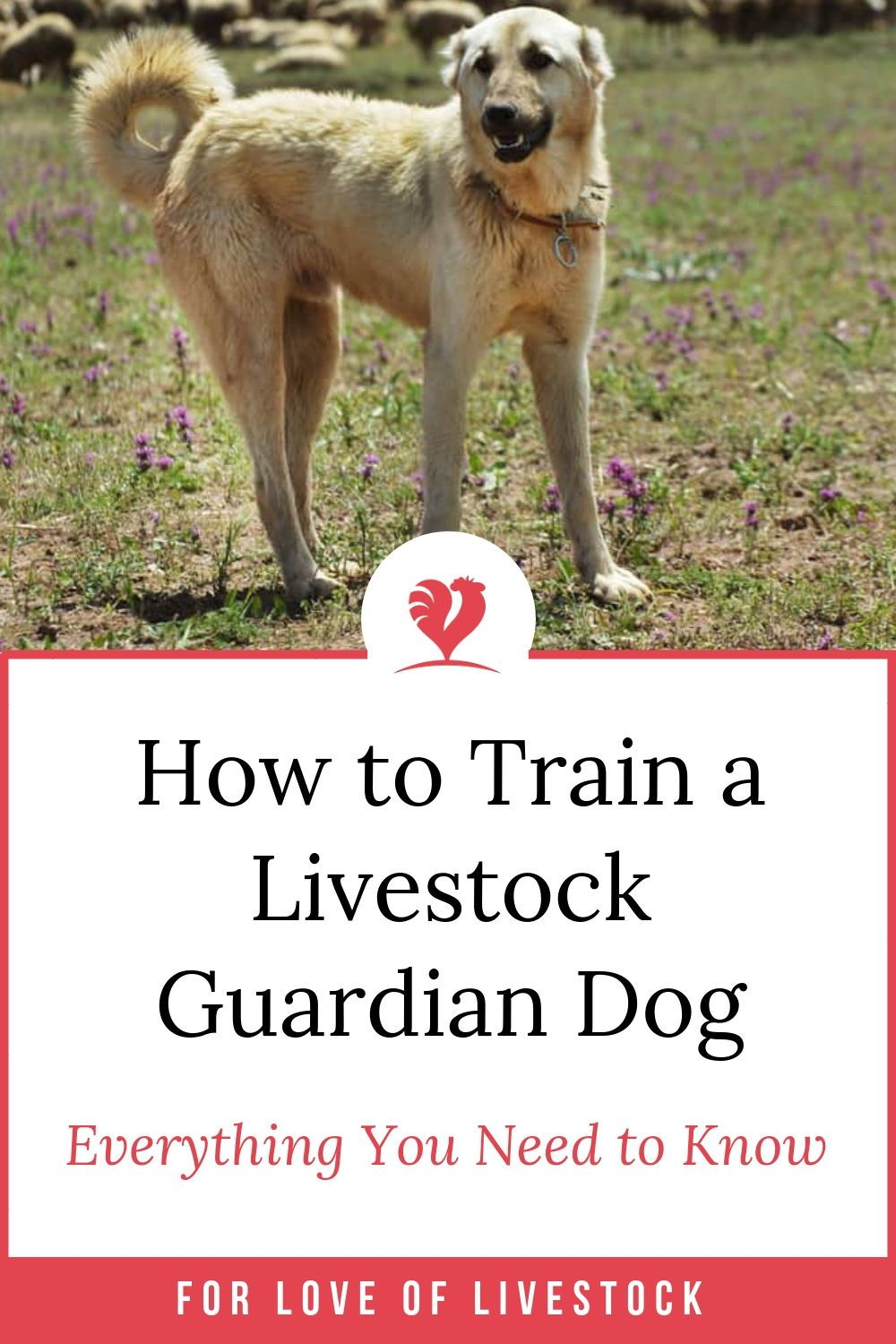 Want To Know How To Train Your Livestock Guardian Dog Lgd