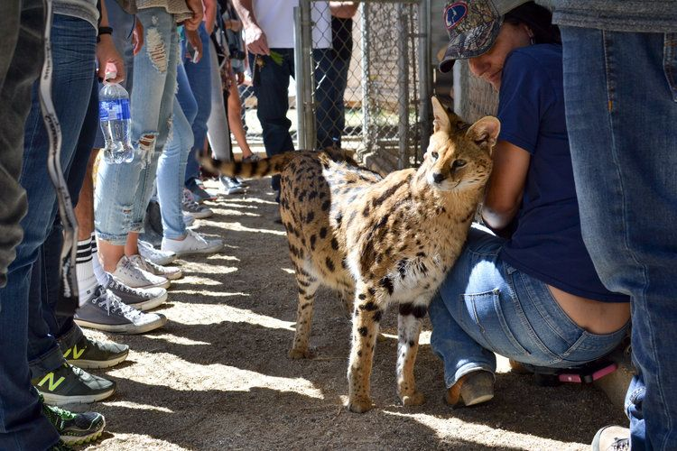 Visit Us (With images) Animal tracks, Animal sanctuary