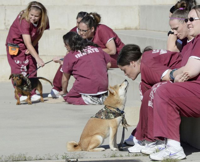 Utah Prisoners Train Service Dogs For Veterans Service Dogs