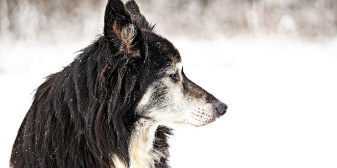 Cervignano (UD): 80enne getta anziano cane malato nel fiume. Denunciato