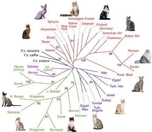 Friday Peer Reviewed Cat Blogging Cat Breeds Cat Breeds Chart