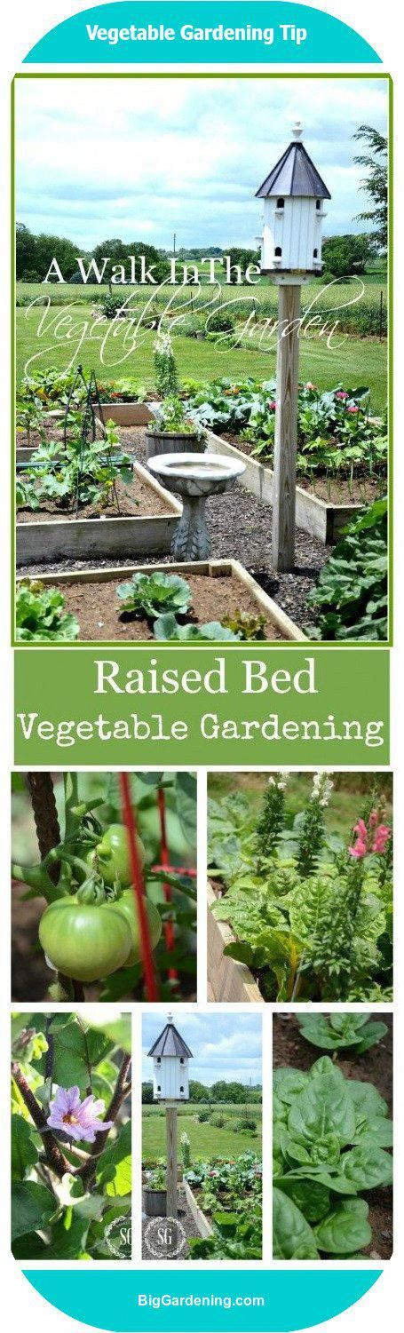 Raised Bed VEGGIE GARDEN planted in French intensive design with