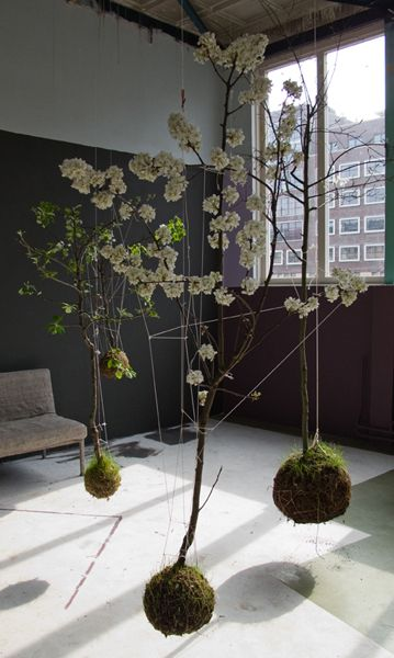hängepflanzen garten mooskugeln mit k nstlichen zweigen von decke h ngen
