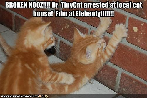 Dr Tiny Cat Being Frisked Funny Cats Funny Cat Photos Cats