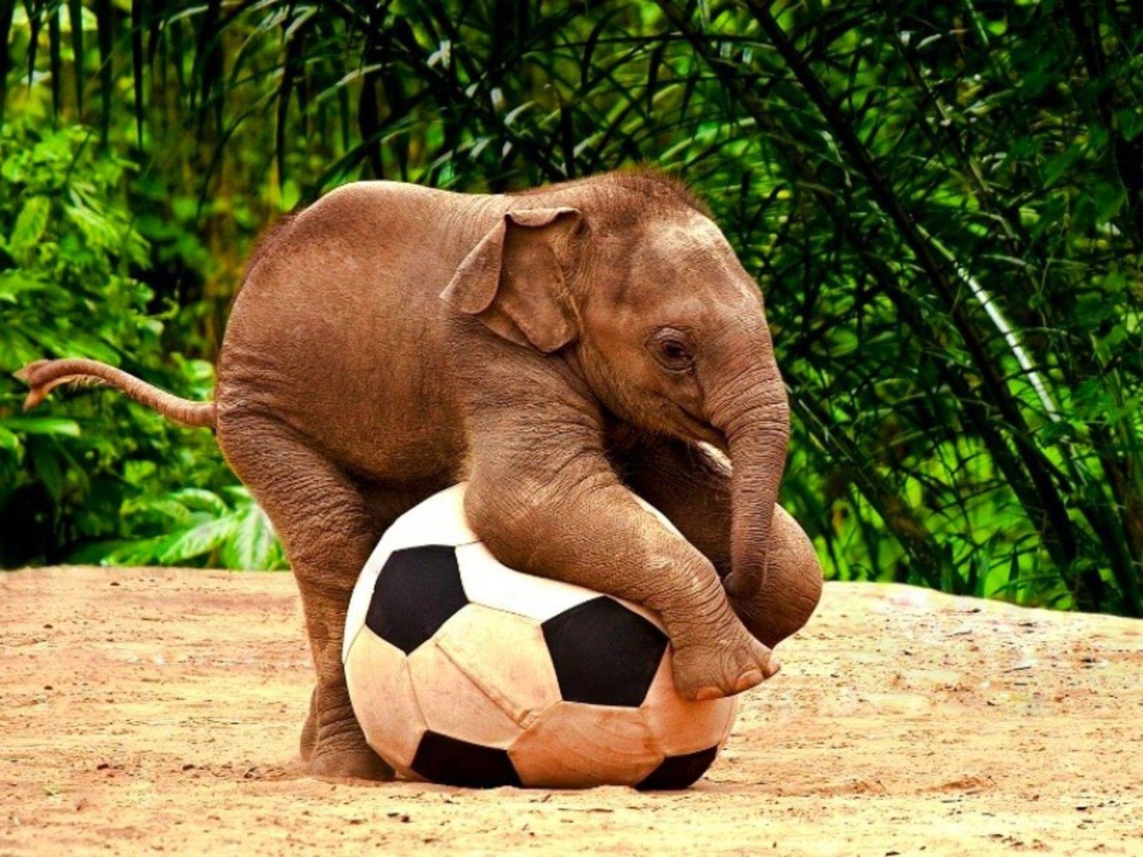Http Www Wallneer Com Wp Content Uploads 2013 06 Baby Elephant Hd Wallpaper Jpg Elephants Playing Cute Animals Animals Beautiful