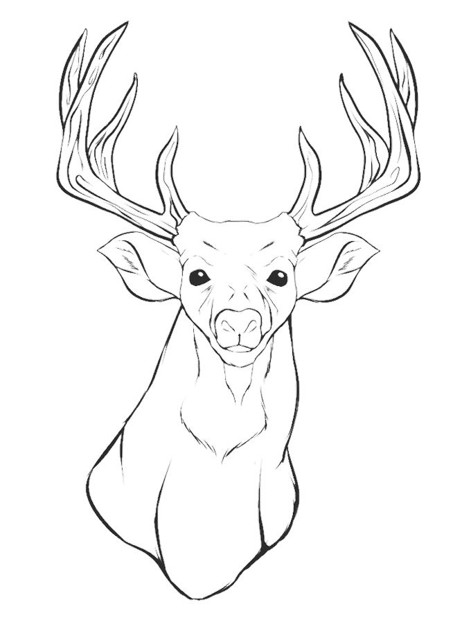 Pincoloring 704 Deer Head Coloring Pages