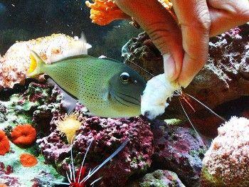 Clases de alimentos para peces art culos sobre peces for Criadero de peces de colores