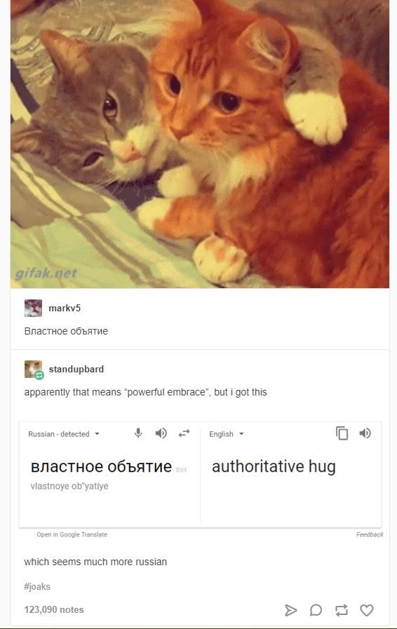 Cuddling In Russian Russian Cat Funny Animals Funny Cute