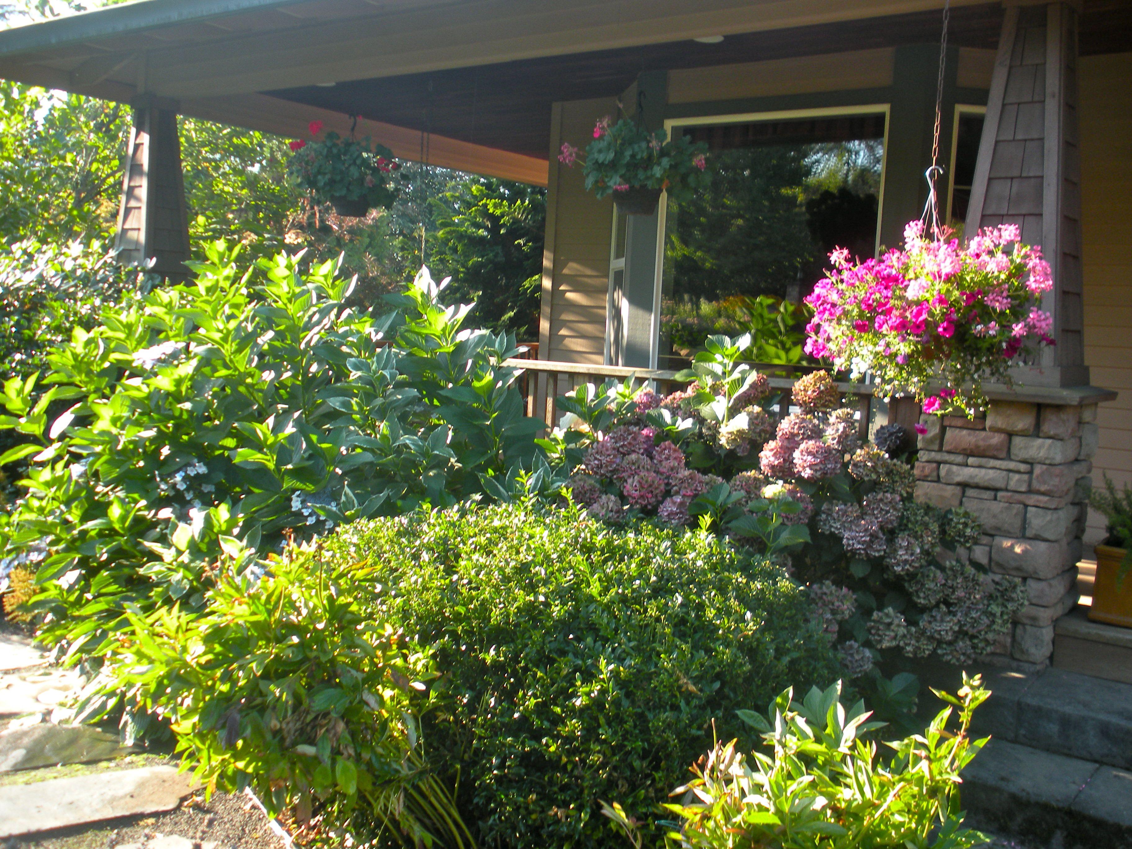 Layered hydrangeas, camellias, rhododendrons, astilbes, hostas. Shady front porch garden.