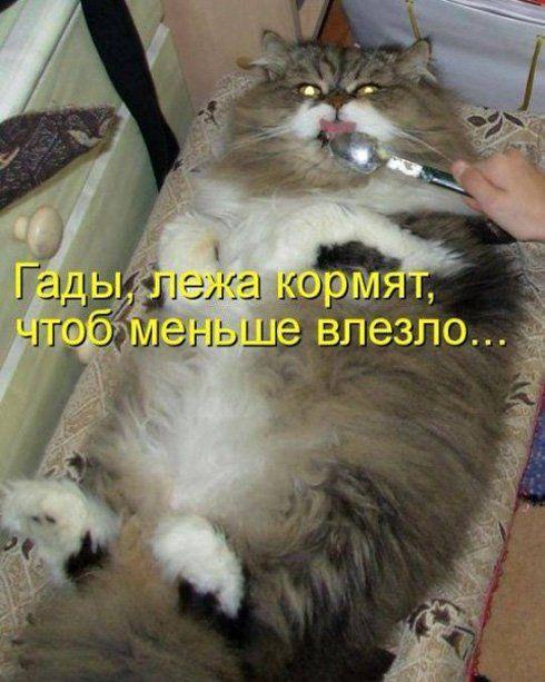Картинки по запросу смешные картинки про животных с надписями