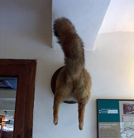 taxidermie humour
