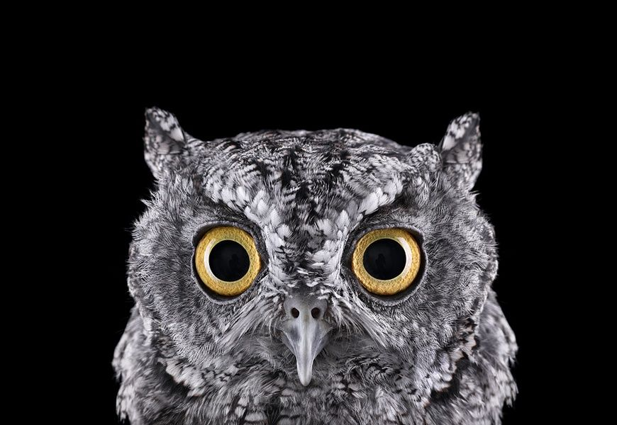 Incredible Studio Portraits Of Wild Animals By Brad Wilson: Brad Wilson At Photo-eye Gallery (With Images)