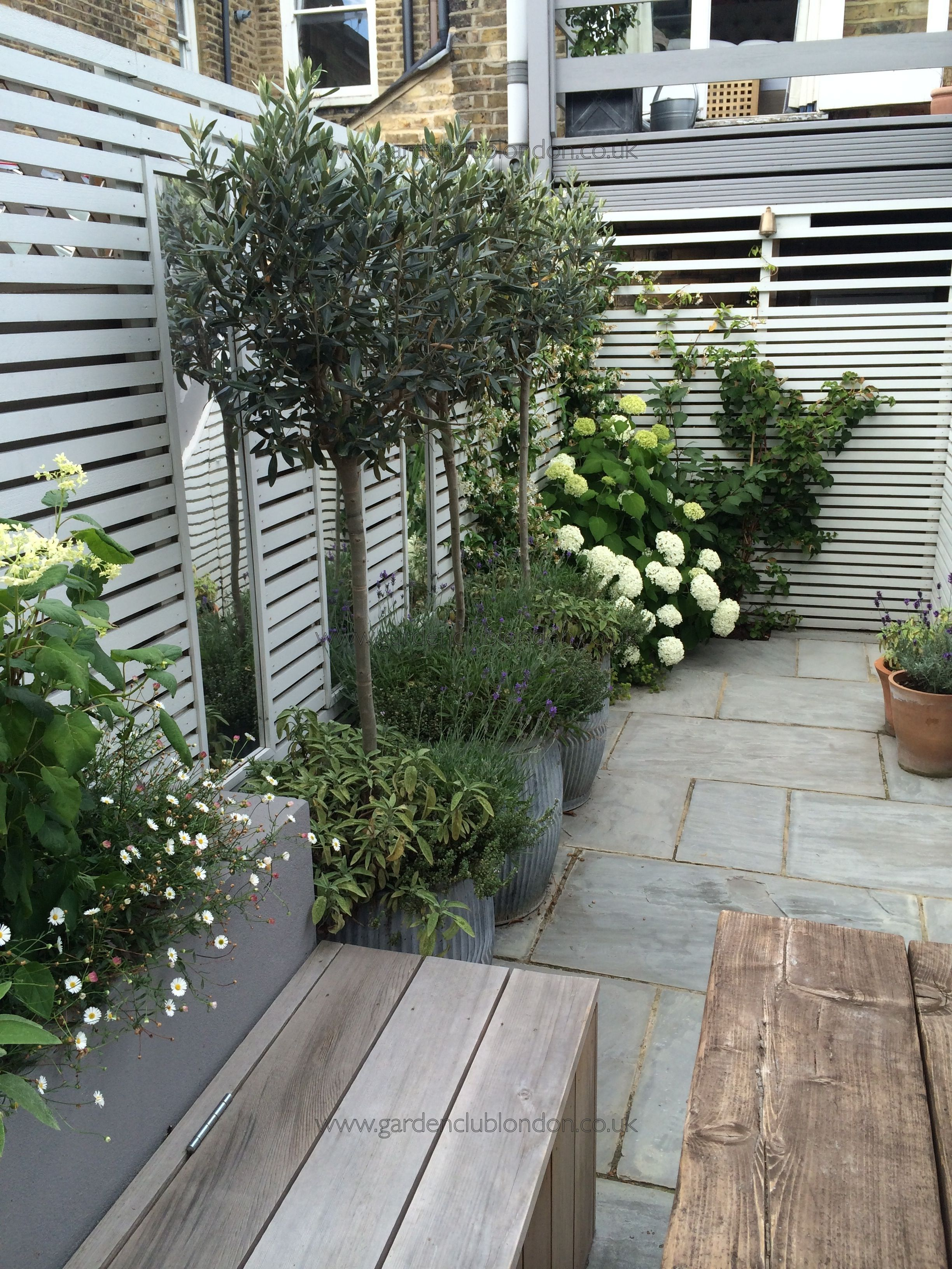 Small rear garden in London  Potted plants in front of mirrors