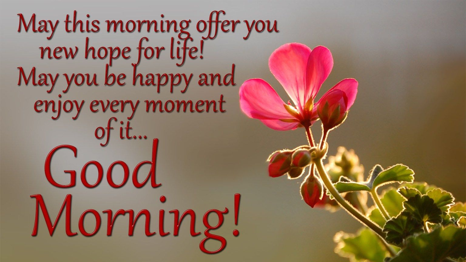 100 Beautiful Good Morning Quotes Wishes Messages 2020 Good Morning Quotes Morning Quotes Happy Quotes Smile
