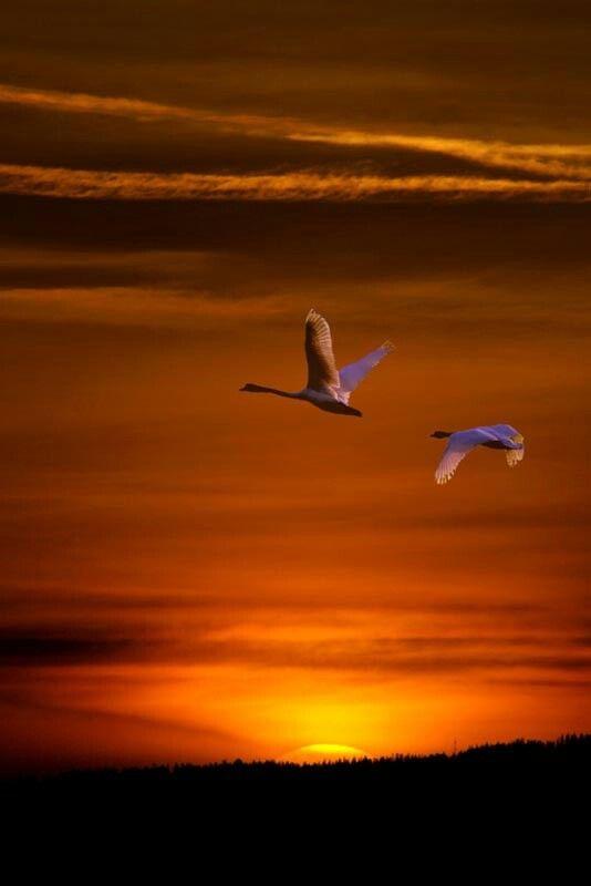 Ahmet Krtl Aves Volando Pajaros Volando Y Fotos De Aves