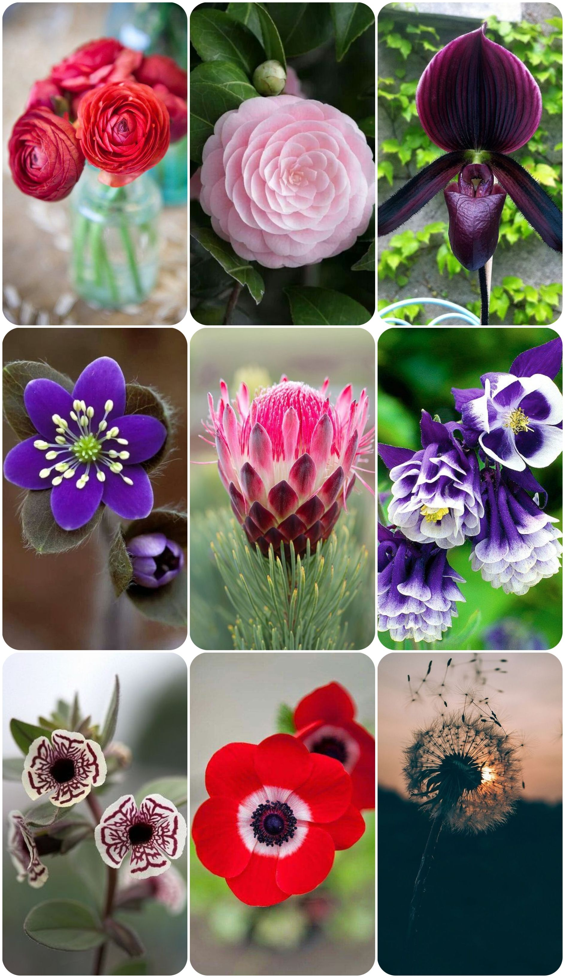 30 Most Beautiful Flowers In The World Flowers Pinterest Red