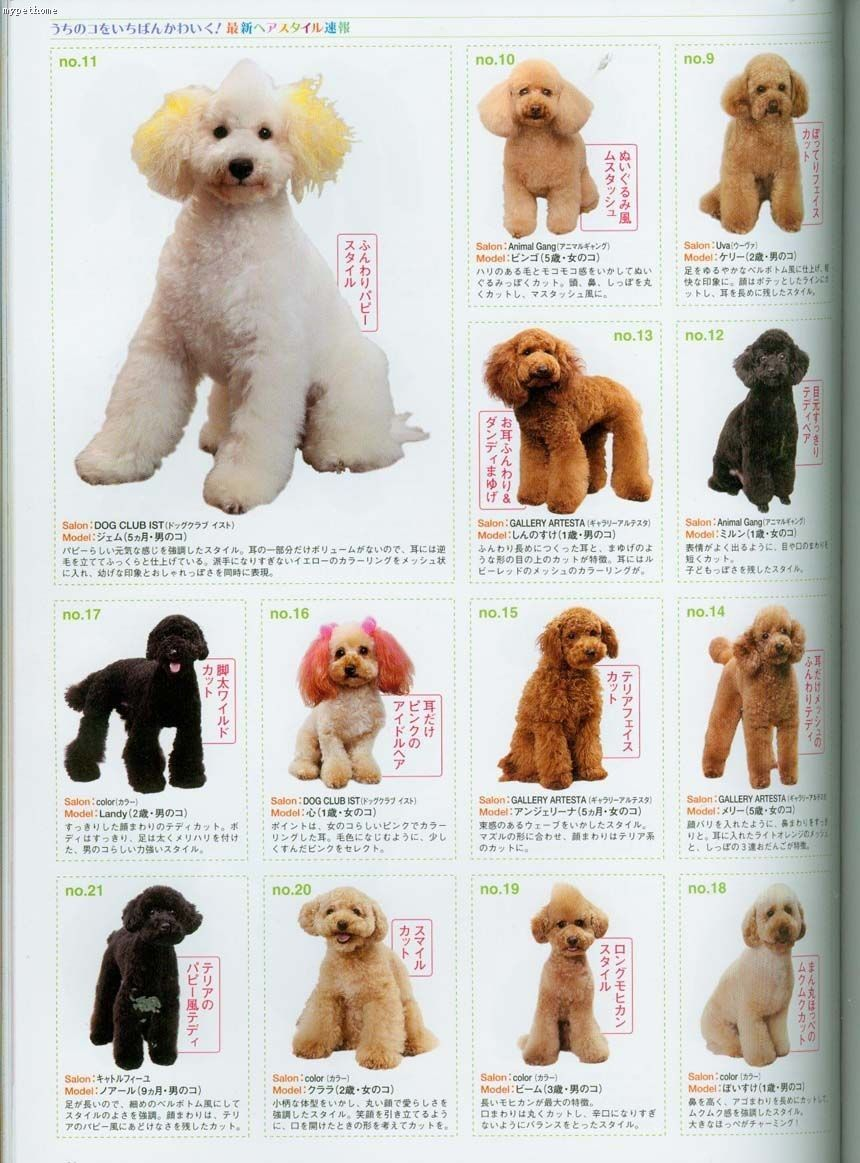 Japanese Grooming Dog Grooming Styles Goldendoodle Grooming Dog Haircuts