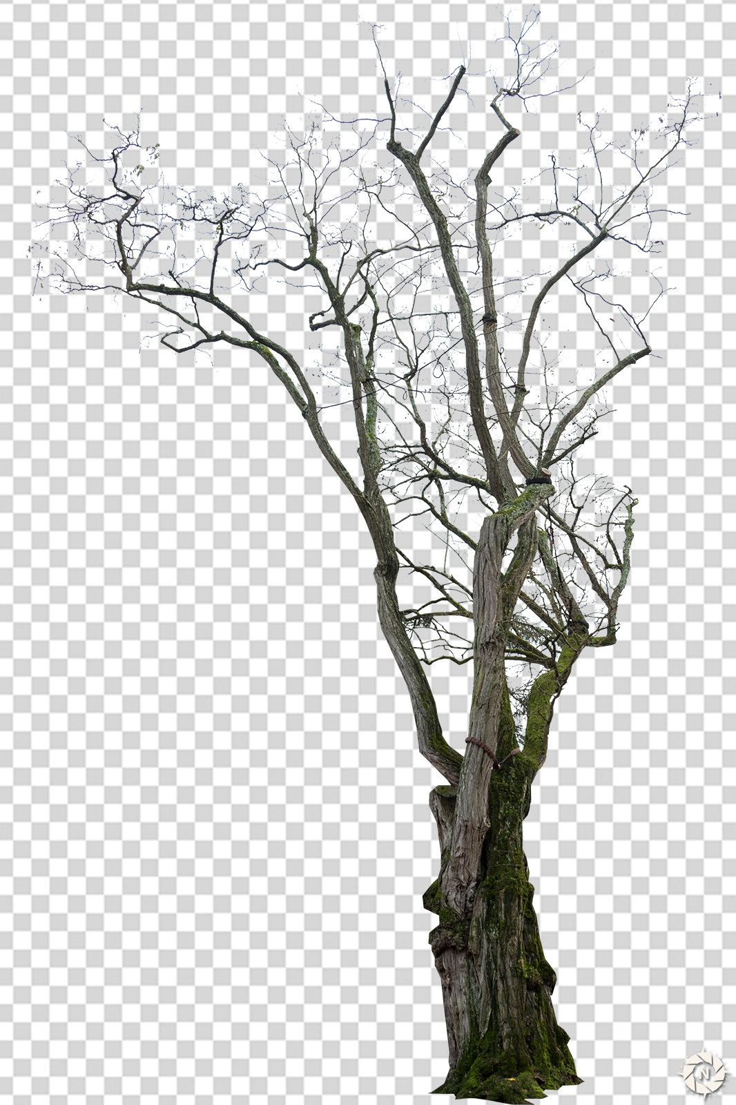 Artstation Png Photo Pack Dead Trees Resources Png Photo Tree Artwork Artwork