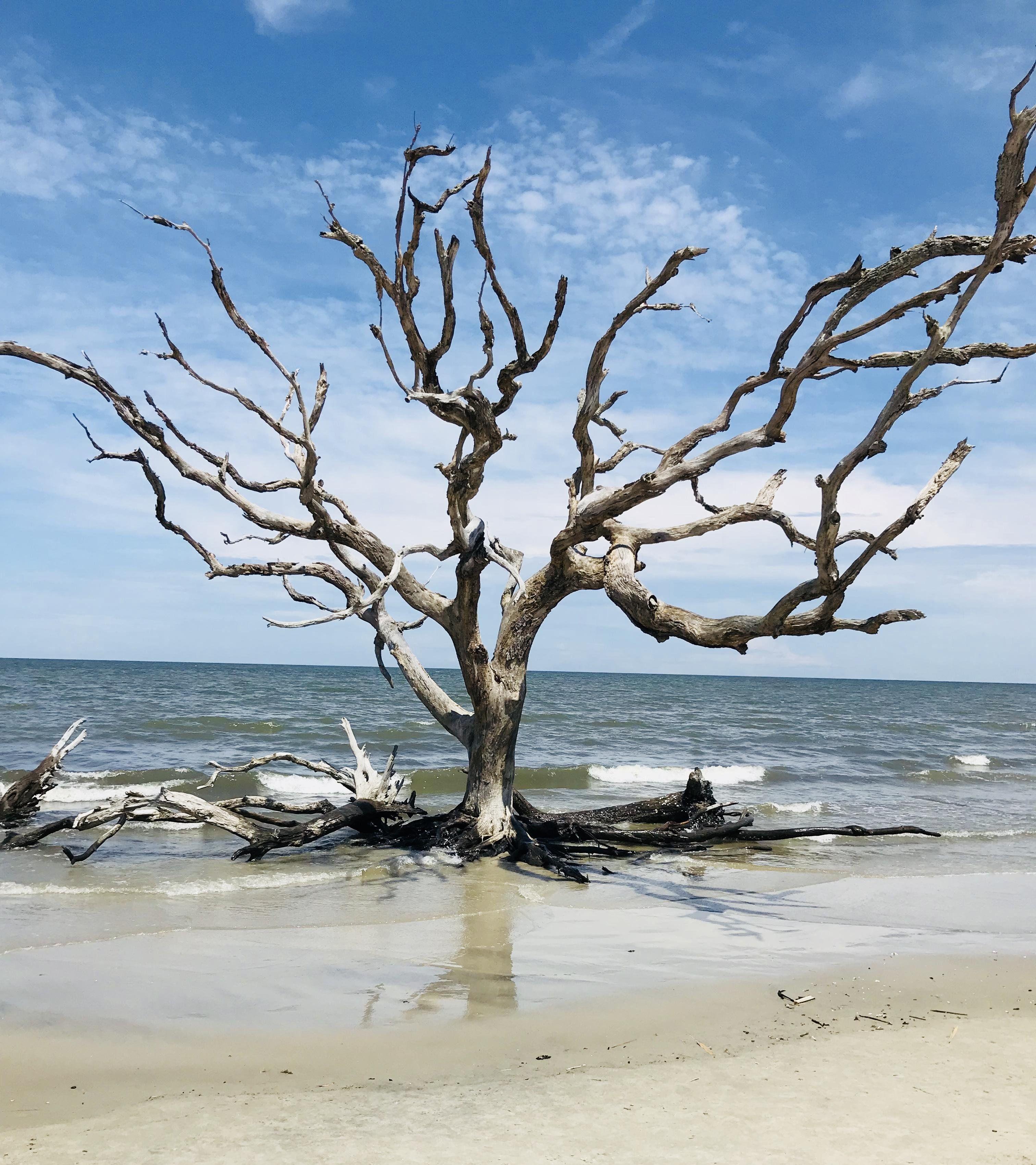 Driftwood beach jekyll island oc 3024x3399