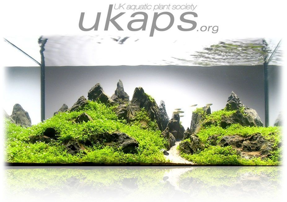 #aquariums #planted #forums #great #about #ideas #site #andgreat site about planted aquariums - idea...