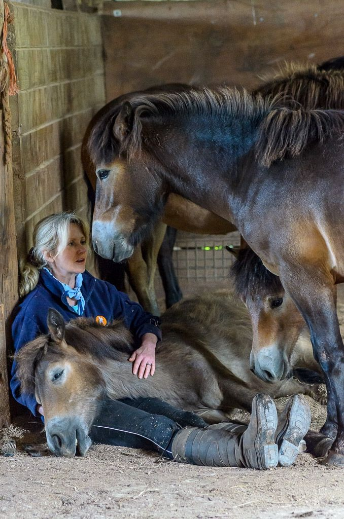 Exmoor foals given a second chance   Horse and Country TV. I hove people that save horses from a cause