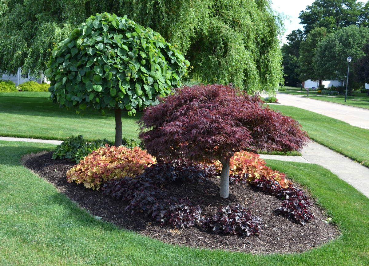Landscaping Around A Group Of Trees : Front yard landscaping ideas ohio with photos