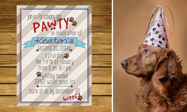Cat And Dog Themed Birthday Parties
