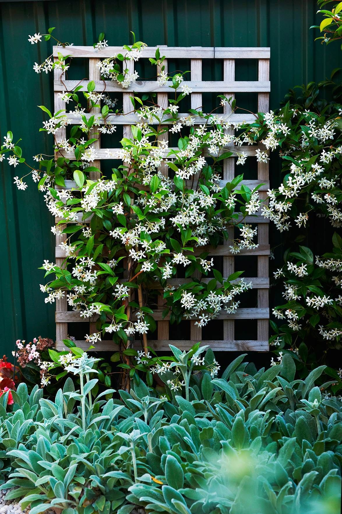 Climbing Plants 7 Fast Growing Climbers Vines And 400 x 300