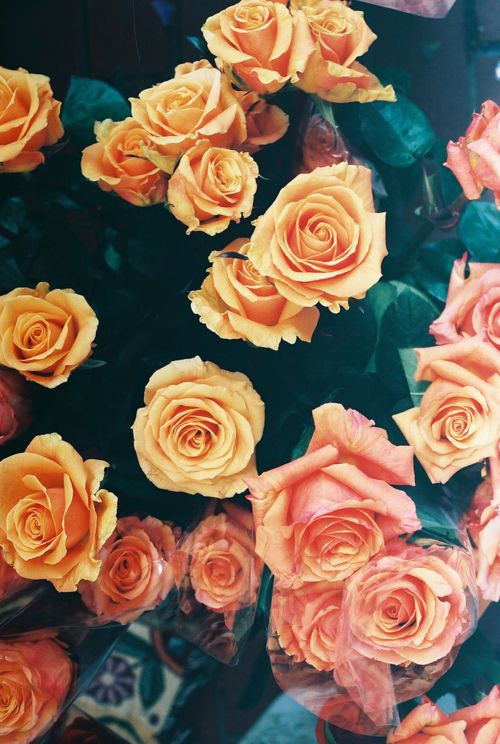 Coral And Orange Roses Flower Wallpaper Iphone Wallpaper Girly Cute Wallpapers