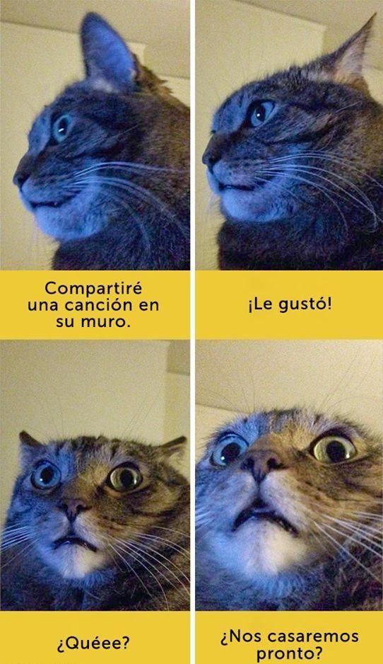 Adorables Gatos con expresiones faciales envidiables