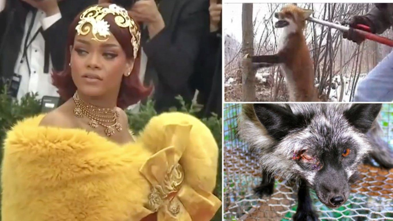 Animal Cruelty In Porn petition: 50 animals died in suffering for rihanna's fur