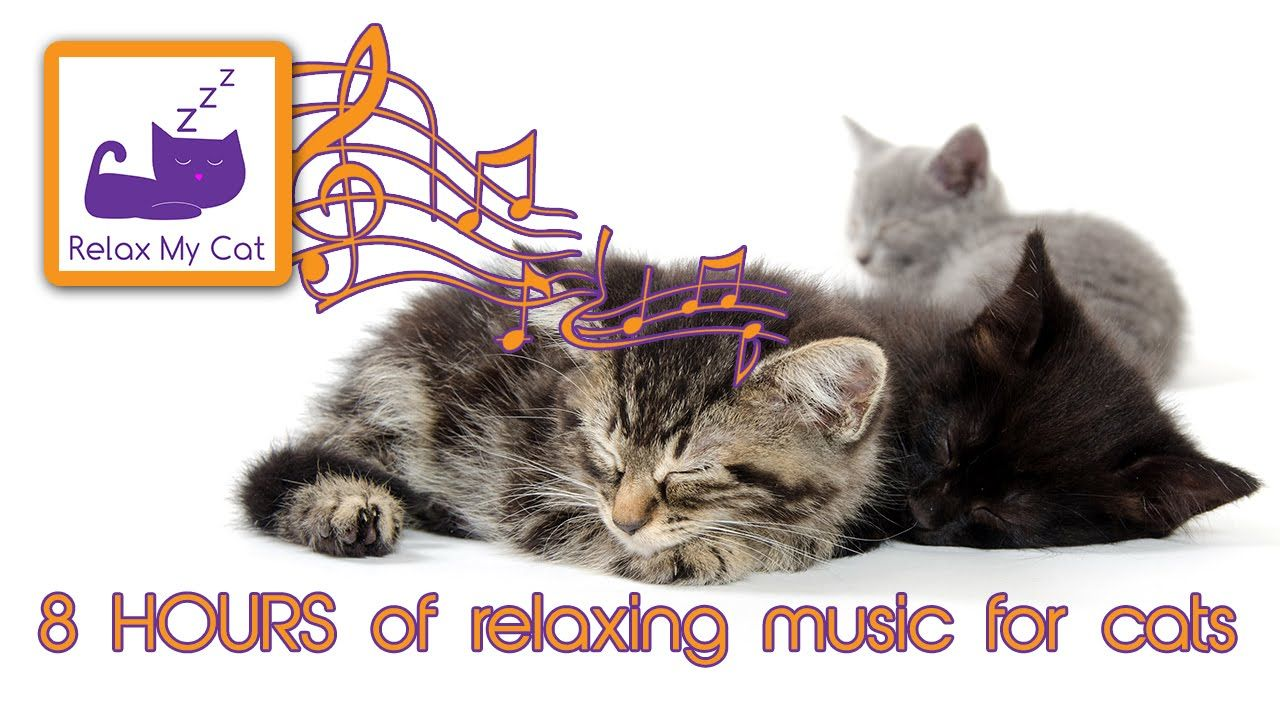 8 Hours Of Cat Music Relaxing Music For Cats 8 Hora Gato Musica Long Relaxing Sounds Cats Cats And Kittens Relaxing Music