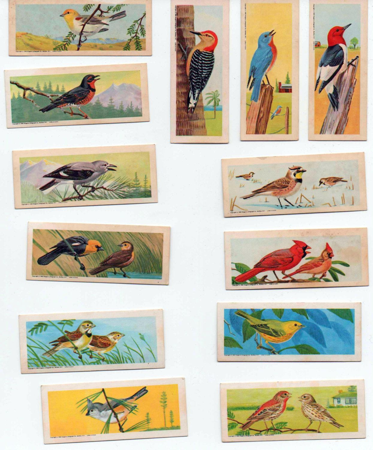 Lot of 13 Collectors Cards, Songbirds of The United States, James O. Welch Co., Cambridge, MA, 1965, good shape by VintageNEJunk on Etsy